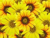 Bouquet de fleurs jaunes — Photo