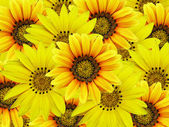 Bouquet of yellow flowers — Stockfoto