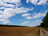 Summer field over blue sky — Stok fotoğraf