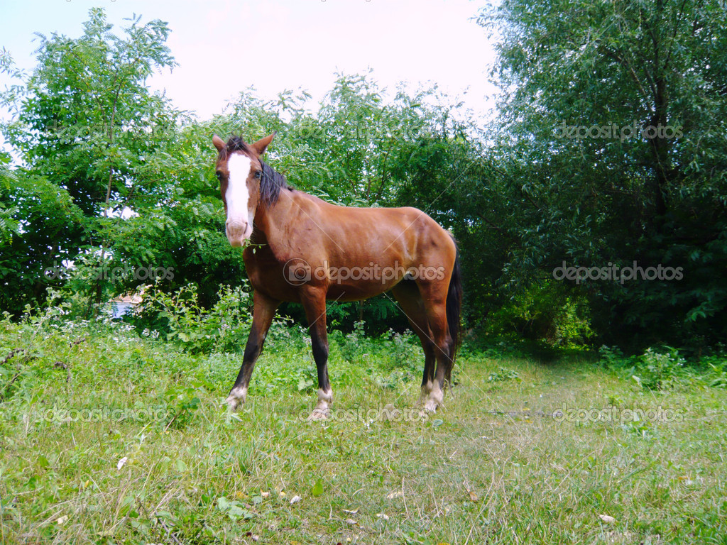 One horse in nature — Stock Photo #2245445