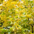 Yellow and green autumn leaves — Stock Photo