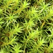 Stock Photo: Green moss background
