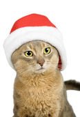 Abyssinian cat in Santa Claus hat — Stock Photo
