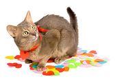 Cat sitting on multicolored paper hearts — Stock Photo