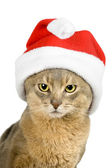 Abissinian cat in Santa Claus hat — Stock Photo