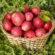 Stock Photo: Basket of red ripe apples