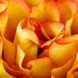 Orange rose petals background - Stock Photo