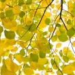Royalty-Free Stock Photo: Yellow and green autumn leaves