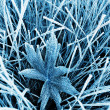 Frosty grass and leaf toned blue — Stock Photo #2209581