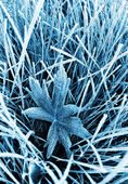 Frosty grass and leaf toned blue — Stock Photo