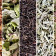 Herbs and tea collection — Stock Photo