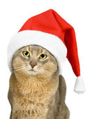 Cat in Santa Claus hat isolated on wh — Stock Photo