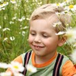 Stock Photo: 3 years boy on daisy field