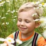3 years boy on daisy field — Stock Photo
