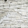 Birch bark background — Stock Photo