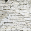 Birch bark background — Stock Photo #1736351