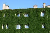 House fully covered by ivy creeper — Stock Photo