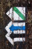 Touristic trail arrows on tree bark — Stock Photo