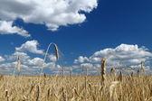 Altın buğday alan üzerinde mavi gökyüzü — Stok fotoğraf
