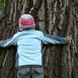 Boy trying to embrance huge old tree - Stock Photo