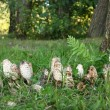 Stock Photo: Group of poisonous mushrooms in a forest