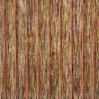 Hedge made of cane - natural texture — Stock Photo