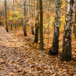 Yellow leaves on path in forest — Stock Photo