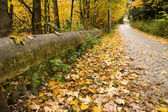 Road covered by leaves — Stock Photo