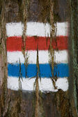 Touristic trail signs on tree bark — Stock Photo