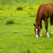 Horse eating grass — Stock Photo #2046232