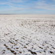 Field snow covered in winter — Stock Photo
