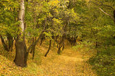 Yellow leaves on path in park — Stock Photo