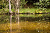 Lake and forest reflection — Stock Photo