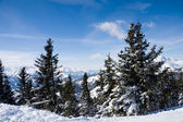 Winter forest in mountains. — Stock Photo