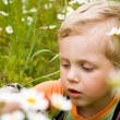 Young boy on daisy field — Stock Photo