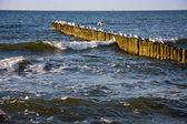 Seagulls on bollards — Stock Photo
