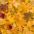 Yellow leaves background — Stock Photo #2526896