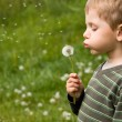 Small boy blowing dandelion - Stockfoto