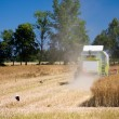 Combine harvesting rape field - Stock Photo