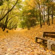 Bench on path in park — Stock Photo
