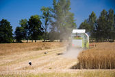 Combine harvesting rape field — Stock Photo