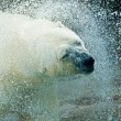 Polar bear — Stock Photo #1835440