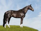 Black horse on blue and green background — Stock Photo