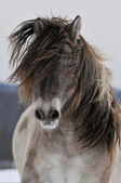 The gray horse run front — Stock Photo