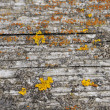 Stock Photo: Wooden background with yellow lichen