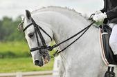 White horse dressage — Stock Photo