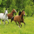 Stock Photo: Horse Herd