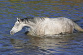 White horse in water — Stock Photo