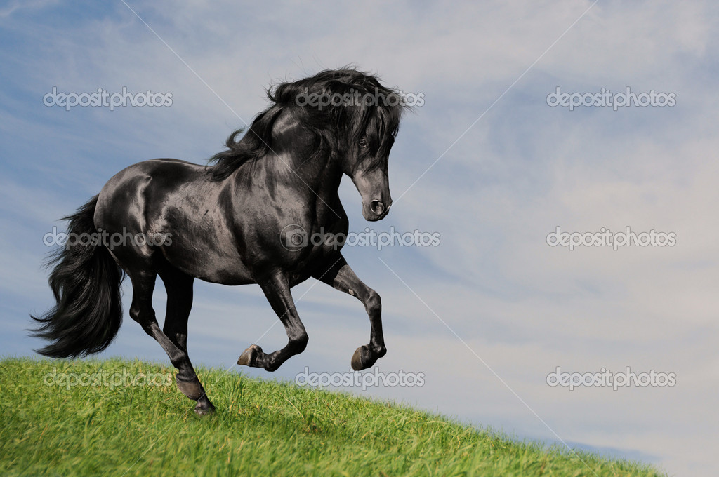 Black horse stallion run gallop om the meadow, collage paint — Stock Photo #2437499