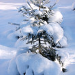 Stock Photo: Snowy winter tree